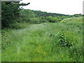 SO6999 : The Edge of the Coppice, near Linleygreen, Shropshire by Roger  Kidd