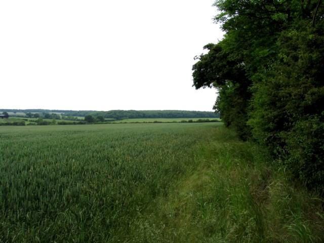 Field edge westwards