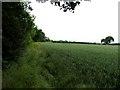 SK6960 : Field edge eastwards by Andrew Tatlow