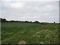 ST6664 : Farmland on Long Hill by Phil Williams