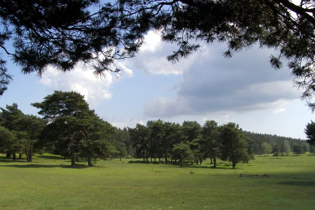 Half Moon Common, New Forest