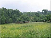 TQ1753 : Meadow in Mickleham by Stephen Craven