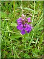 NS6825 : Early Purple Orchid by Mary and Angus Hogg