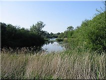 TR1859 : Part of Fordwich lakes from the Stour Valley Walk by Nick Smith
