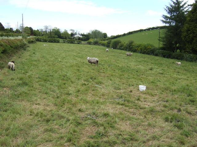 Sheep pasture on Windmill Hill