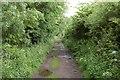 NO1041 : Track to Millhole by John Allan