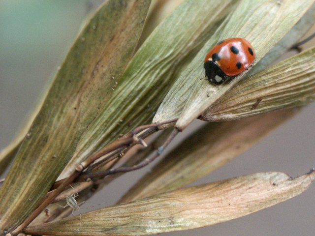 Ladybird in the woods at Woodhall Spa