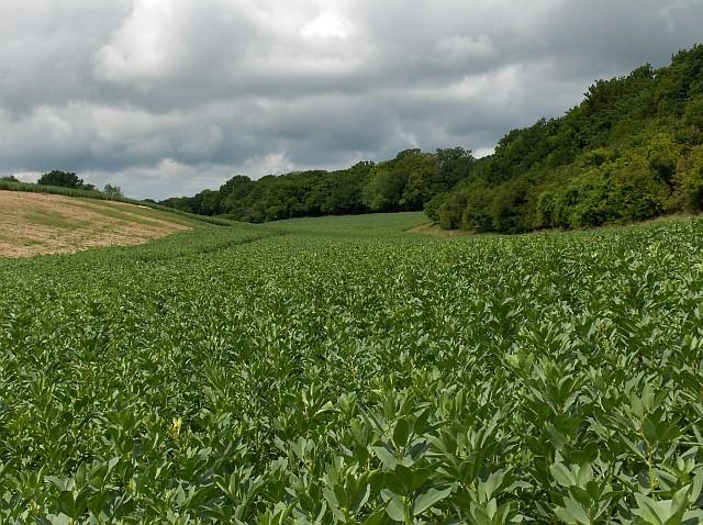 Farmland, Wherwell