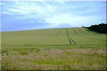 SK8939 : Wheel tracks in the Wheat by Donnylad