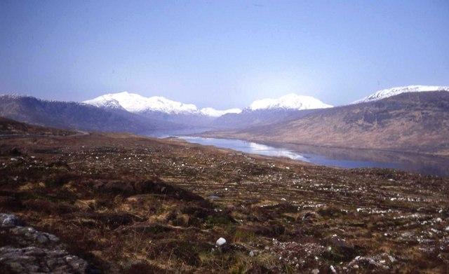 New plantation at Loch Loyne