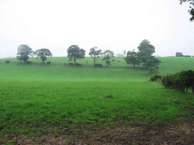 Bracken Hill