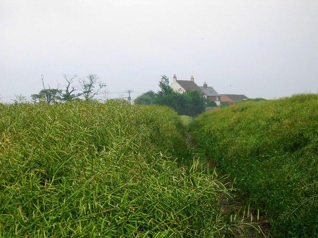 Hauxley Farm