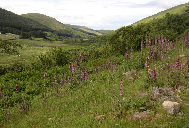 July flora in the College Valley