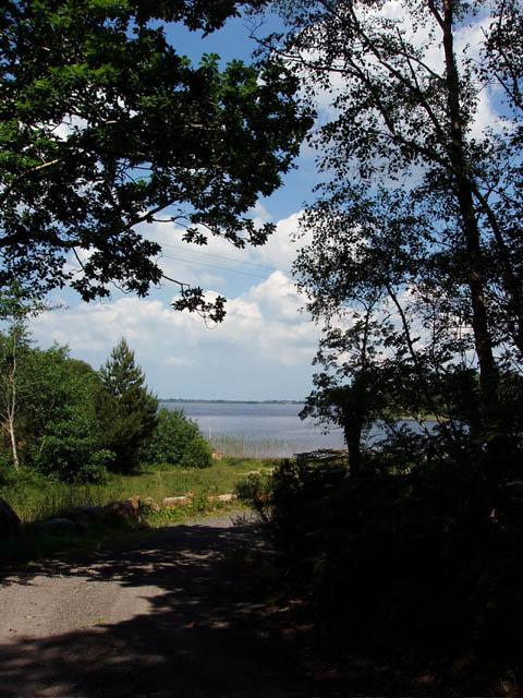 Woodland path to Lough Conn