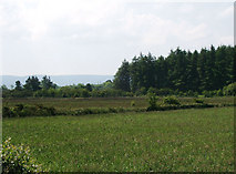 G3024 : Farmland and forestry near Corbally by Liz McCabe