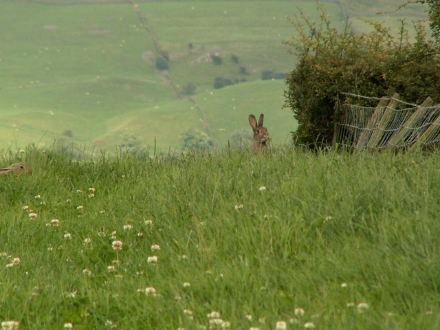 Rabbit Warren on Footpath