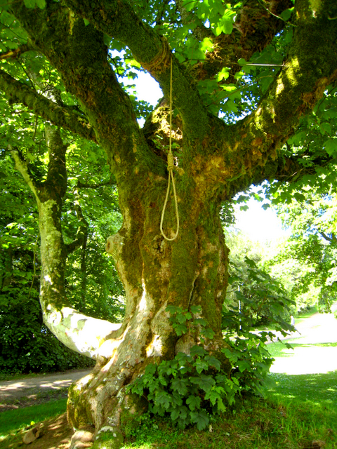 The Gallows tree, known as the Dule Tree, at Leith Hall