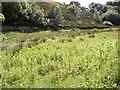 SE1134 : Marshy area, Chellow Dean, Allerton, Bradford by Humphrey Bolton