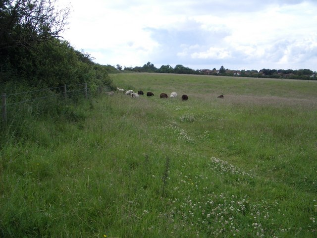 Southern Boundary of Branodunum Roman Fort at Brancaster