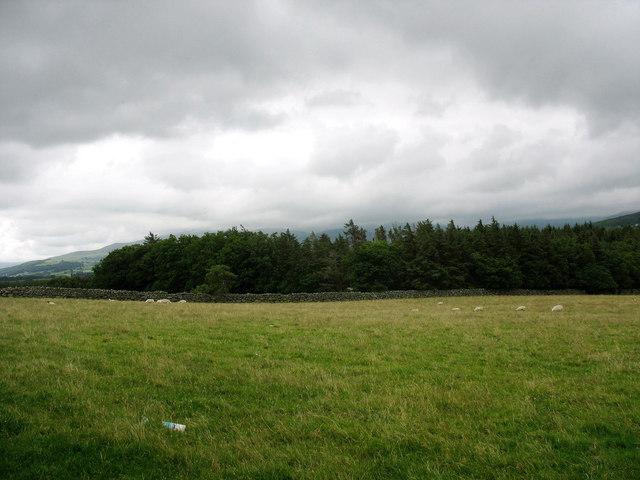 Coed Niwbwrch Woodland on a day in July