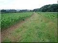 SO6561 : Maize field at Lower Barn by Trevor Rickard