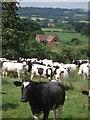 SO6561 : Friendly Friesians at Underley Farm by Trevor Rickard