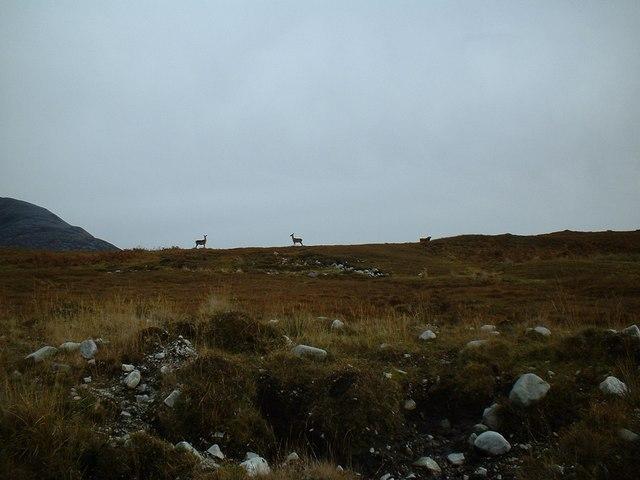 Deer near Paps of Jura