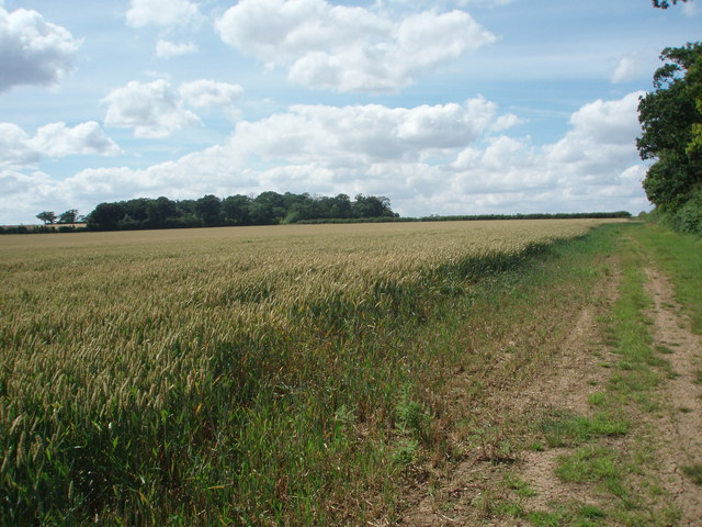Wheat Field and Copse