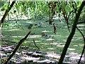 SU0781 : Wootton Bassett Mud Springs (2) by Brian Robert Marshall