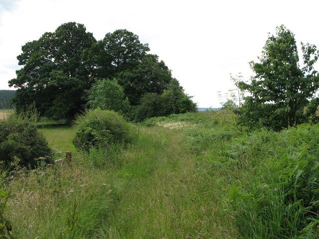 Track towards Shepherd's Dene