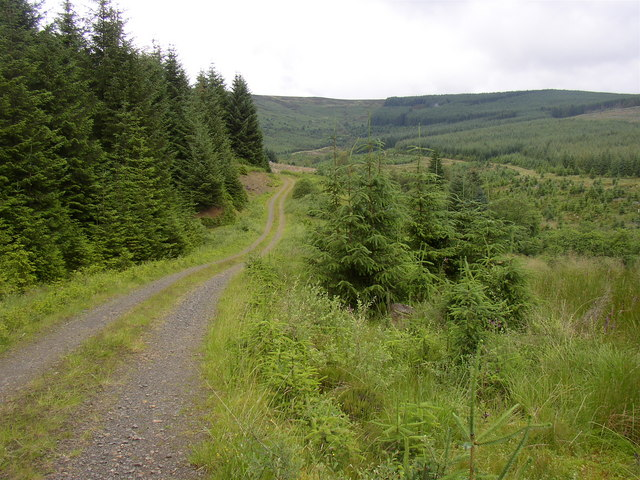 Forestry road at Archer Cleugh, Kielder.