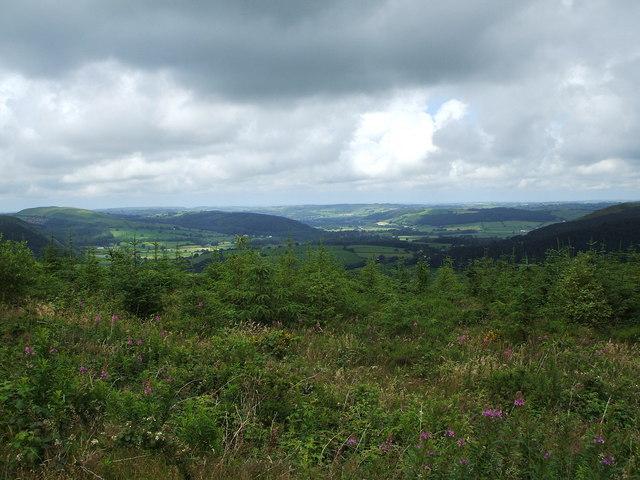 New forestry plantation near Nant-Byr