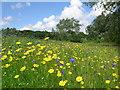 """SJ3877 : """"Innospec Meadow"""" by Paul Roberts"""