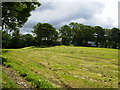 SD6988 : Field barns amongst trees east of High Barth near Dent by Phil Catterall