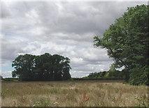 TA0231 : Willerby Low Road by Paul Glazzard