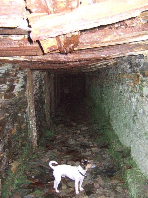 Rosebush quarry, exploring the adits: 8