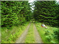 NM6647 : Track in Fiunary Forest by Iain Thompson