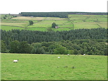 NY9449 : The valley of Beldon Burn (3) by Mike Quinn