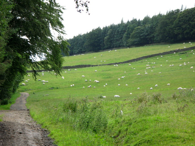Pastures and Whitehill Plantation near Newbiggin (2)