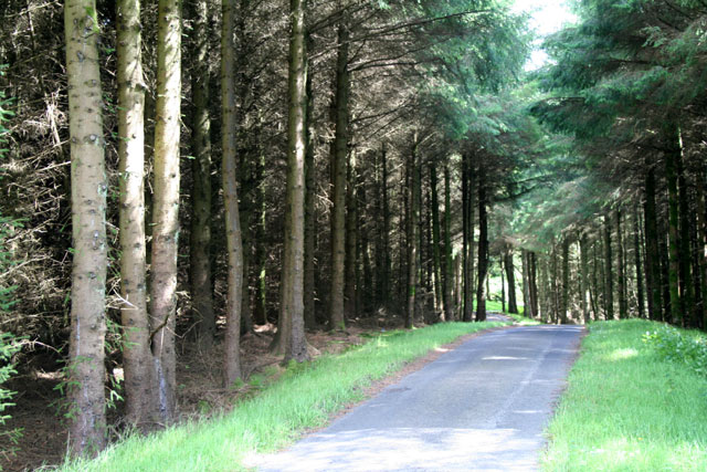 In Ballypatrick Forest