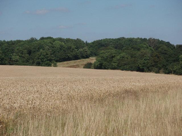 Olney Park Farm