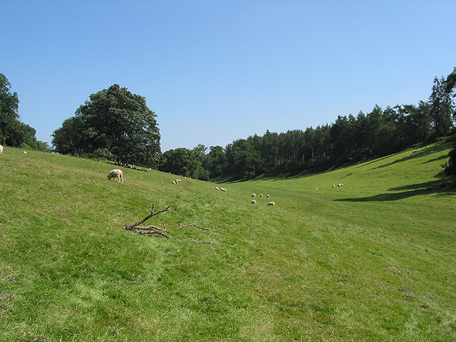 Footpath through grazing land