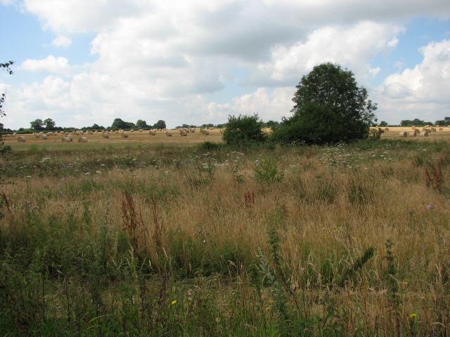Farmland near Crow Hall