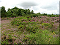 TG1721 : Buxton Heath Nature Reserve by Evelyn Simak