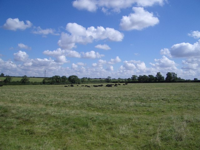 Field with Ridge and Furrow east of Bozeat
