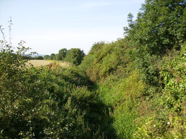 Overgrown watercourse next to Seamer Sewage Works