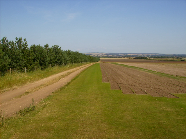 Turf growing and harvesting near Grange Cottage