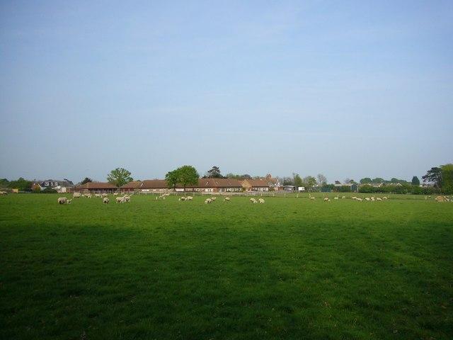 Sheep grazing on The Stud Farm, Polegate