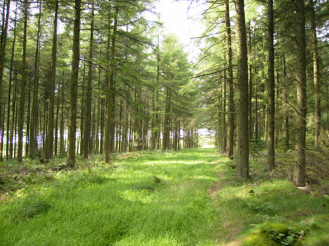 Near Raindale Head in Cropton Forest