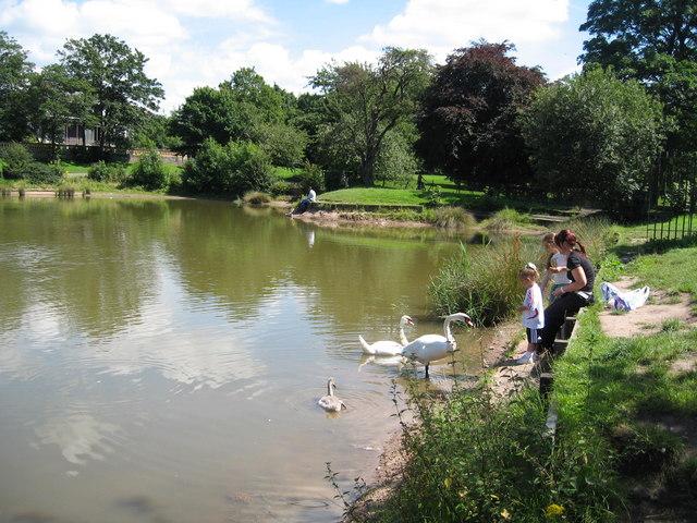 Feeding the Swans, Princes Park Lake